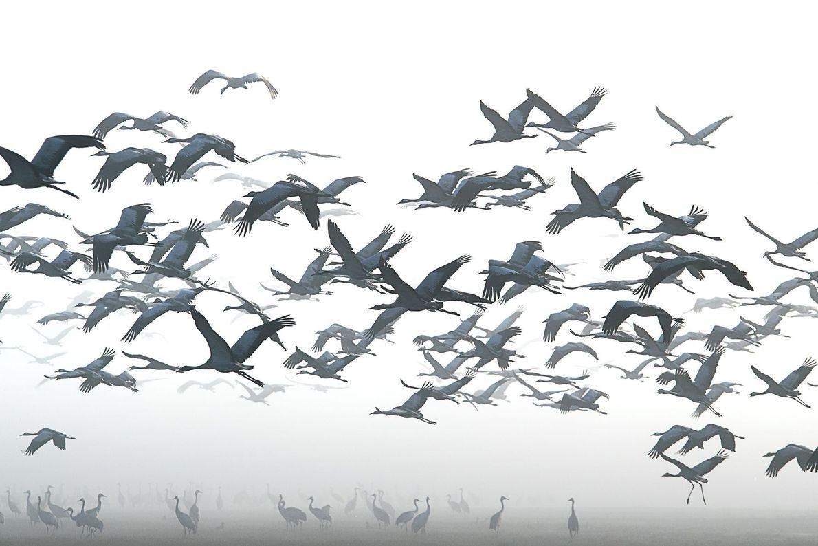 Aves de la nieve