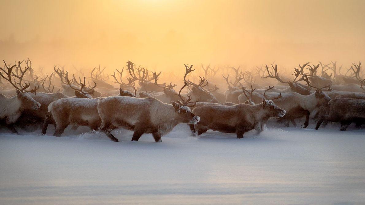 Caminata de invierno