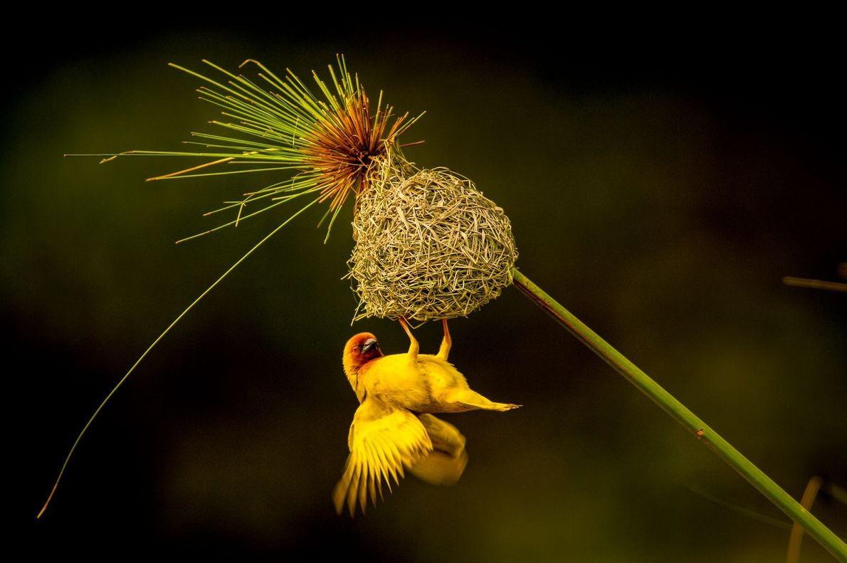 El mejor nido