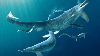 Se descubre un depredador marino de 4 metros adentro del vientre de otro en impactante fósil ...