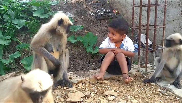 La insólita amistad entre un niño y un mono