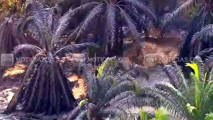 2.400 animales mueren en derrame de petróleo en Colombia