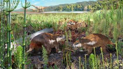Chile: identifican al primer mamífero del Mesozoico del país