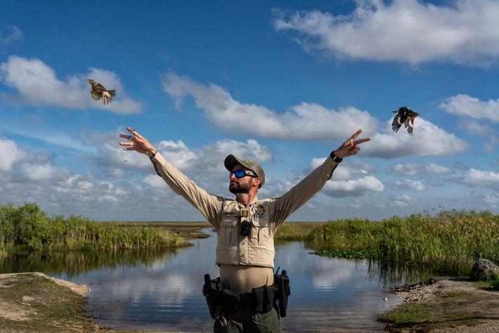 Cada año capturan miles de aves cantoras migratorias en Florida para suministrar un mercado ilegal pujante. ...