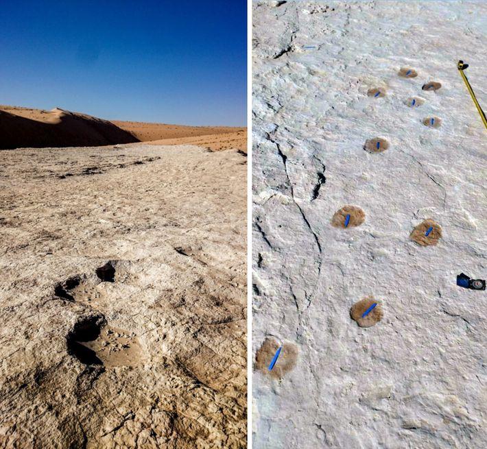 Las huellas de elefantes (izquierda) y de camellos (derecha) estaban entre las huellas fósiles encontradas alrededor ...