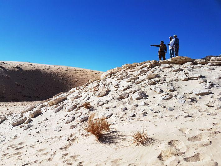 Las huellas fósiles se encontraron en el antiguo depósito del lago Alathar en Arabia Saudita.