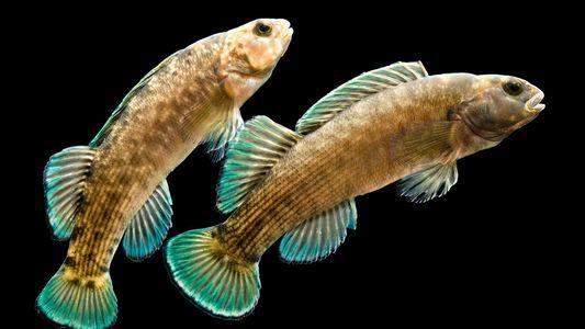 Diversidad de peces de agua dulce