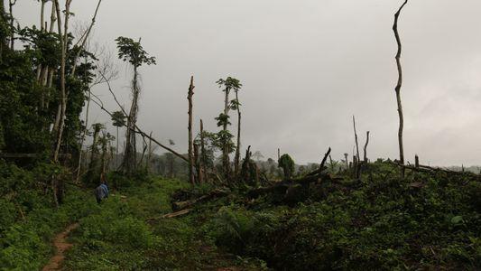 Presentan una nueva forma de medir la vulnerabilidad de los bosques tropicales ¿Podrá ayudar a salvarlos?