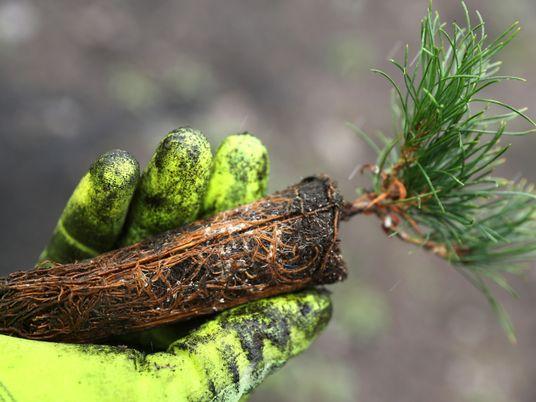 Estados Unidos: plantar árboles ayuda a combatir el cambio climático, pero se necesitan mil millones de ...