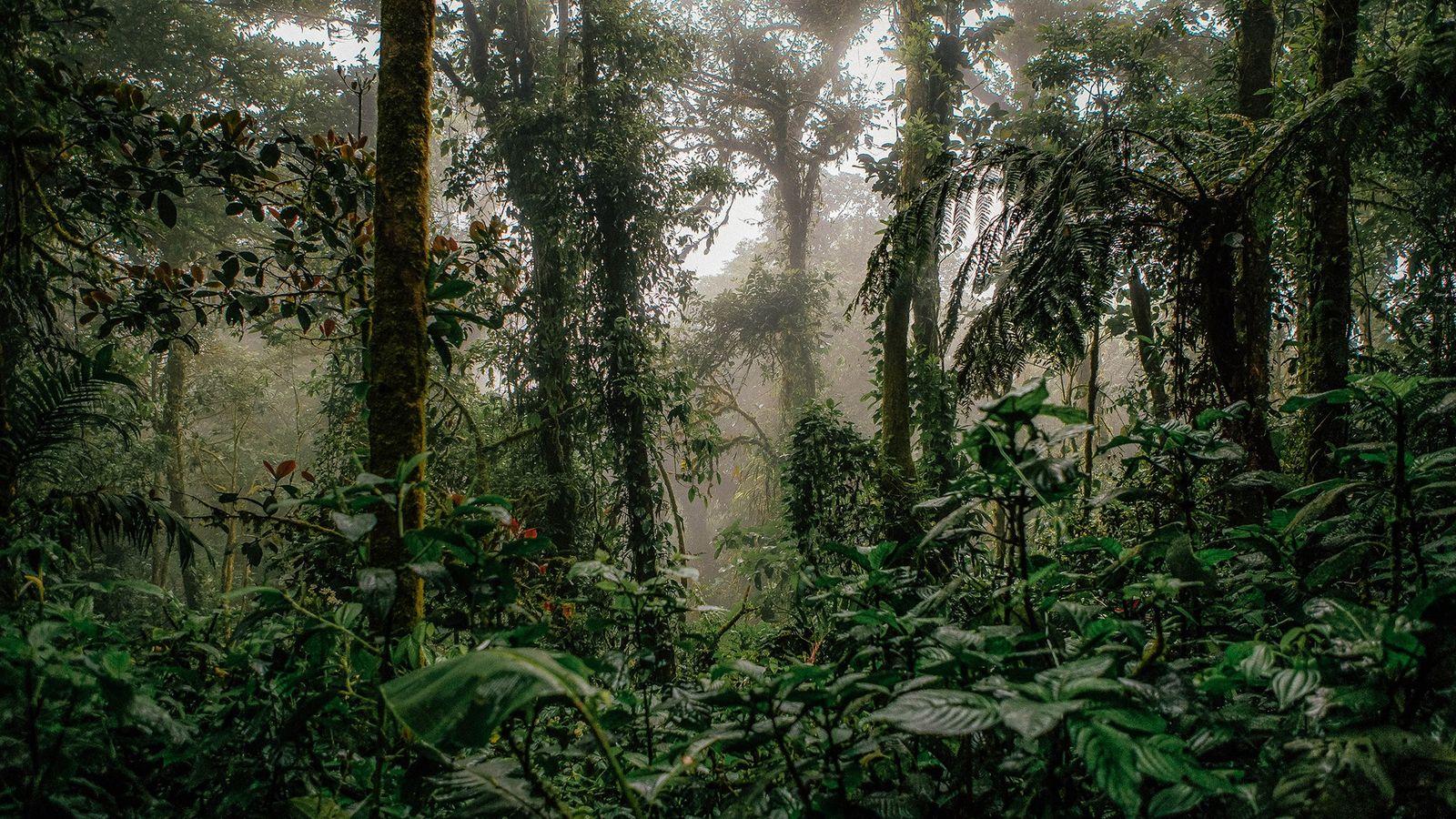 Las selvas tropicales de Monteverde, en Costa Rica, atraen a miles de amantes de la naturaleza ...