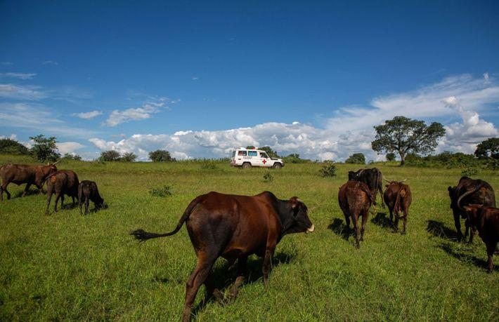 Un camión transporta vacunas cerca de la aldea de Jari en Zimbabwe en febrero de 2021 ...