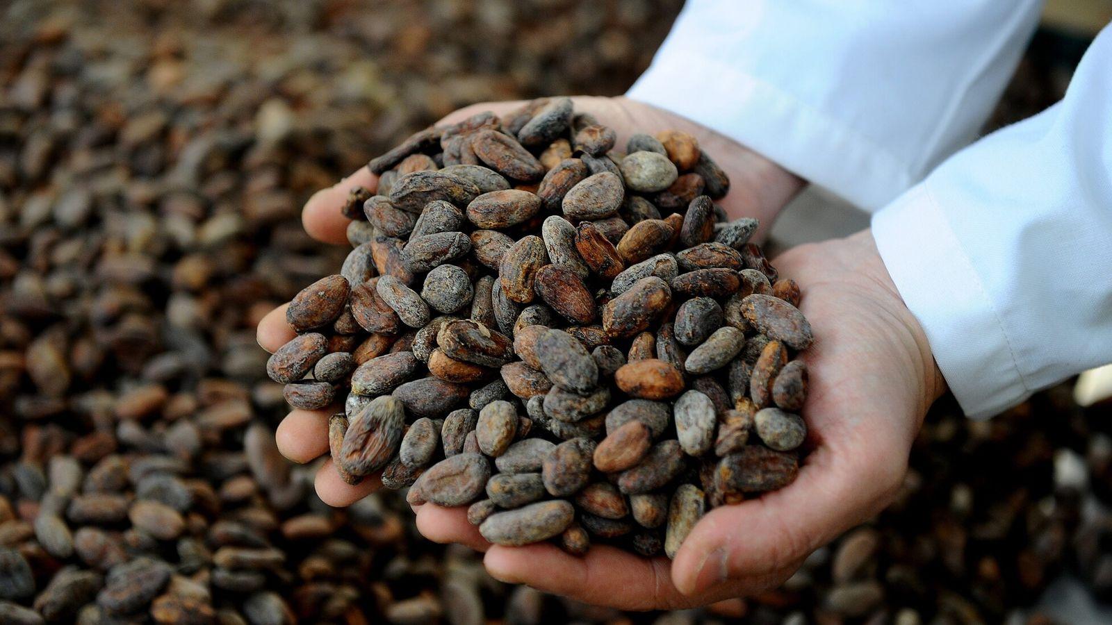 Ecuador es reconocido por su chocolate gourmet de primera calidad, elaborado con variedades de cacao autóctonas.