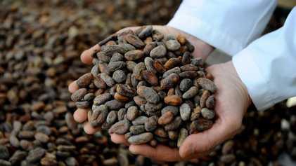 Ecuador: descubre dónde se produce uno de los mejores chocolates del mundo