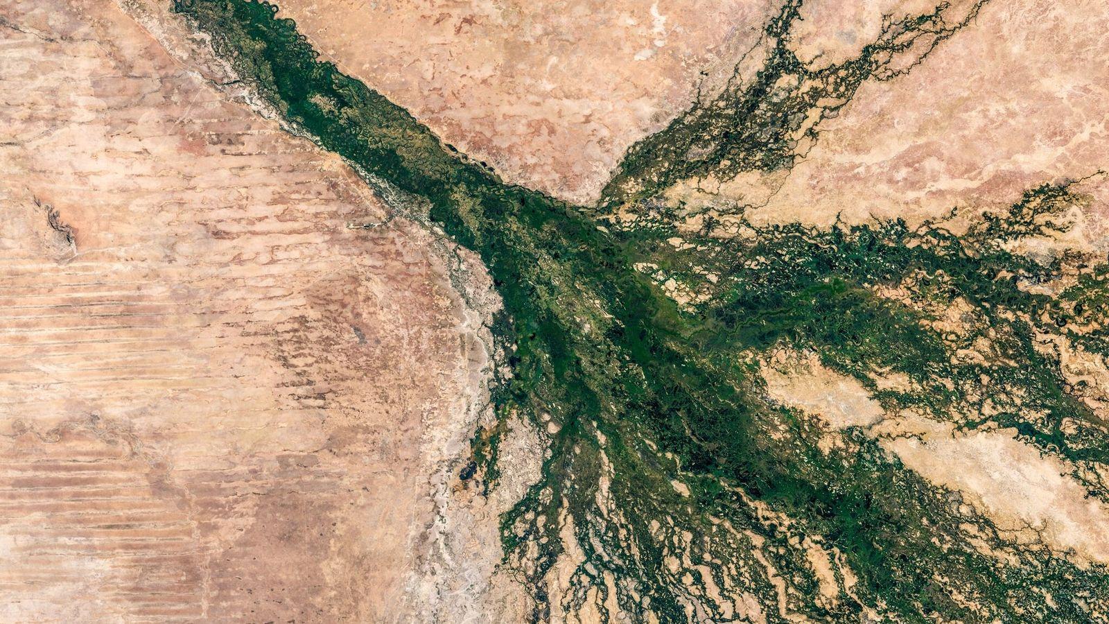 Unas franjas verdes definen el delta del Okavango de Botsuana, visto desde el espacio. El humedal ...