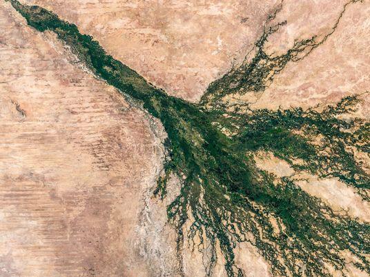 Planean perforaciones petroleras en la región del Okavango, el último bastión de los elefantes