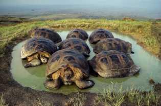 giant-tortoises-galapagos