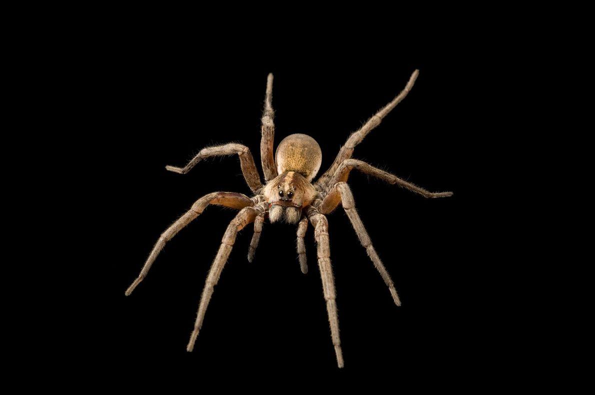"""ARAÑAS - """"Las arañas son generalmente negras o grises y se esconden durante el día. Suelen ..."""