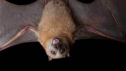 """Cómo gatos, ratas, murciélagos y otros se convirtieron en """"animales de Halloween"""""""