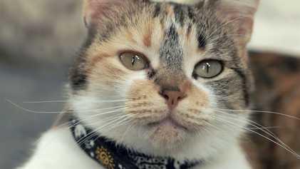 La ciencia del maullido: cómo se comunican los gatos