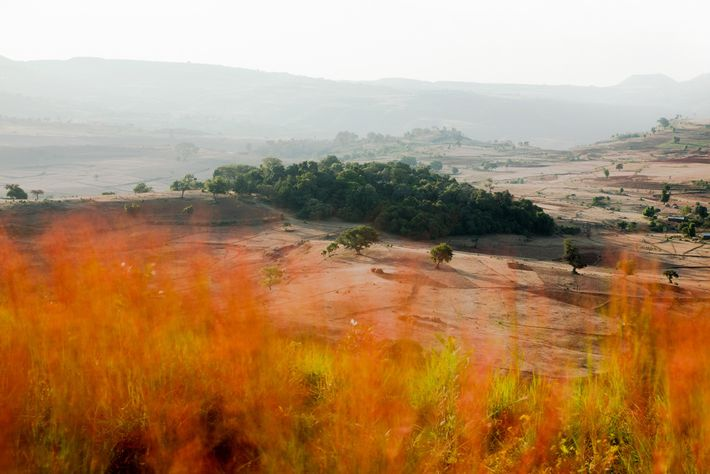 Los campos cerca de la iglesia Gebita Giyorgis invaden el área del bosque eclesiástico.