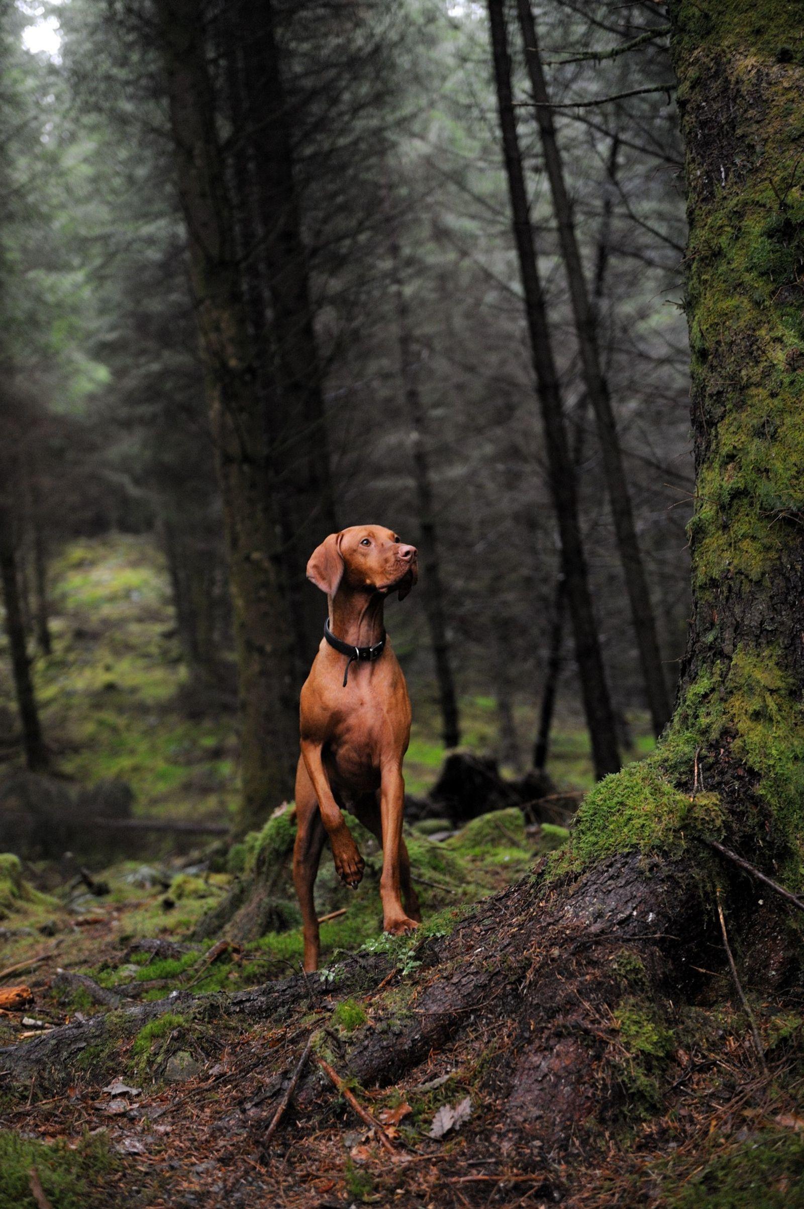 Los perros modernos podrían descender de los lobos antiguos que jugaban con los humanos
