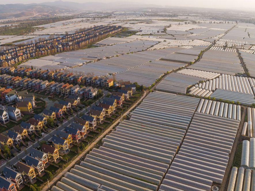 Junto a las viviendas suburbanas al norte de Kunming, provincia de Yunnan, estos invernaderos producen cultivos ...