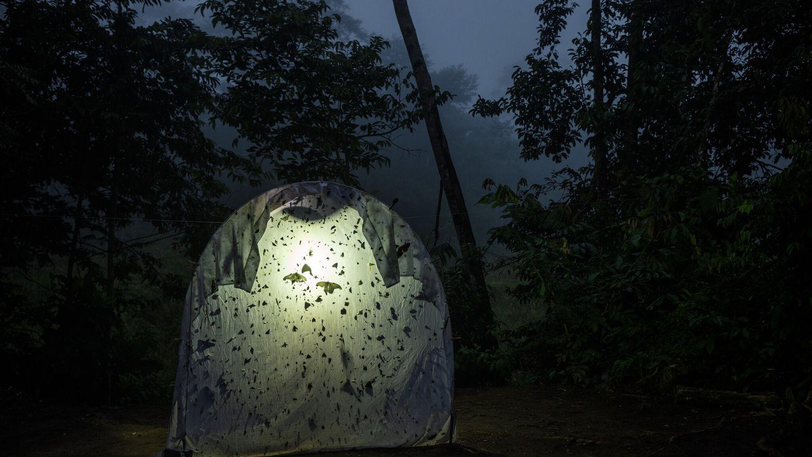 Insectos voladores nocturnos se acumulan en una sábana iluminada en una estación de investigación en Ecuador.