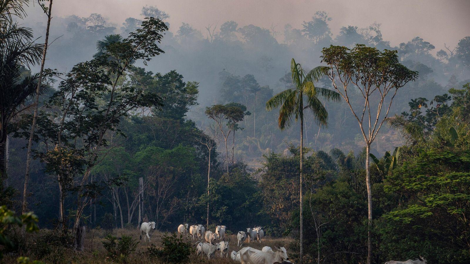 El humo de los incendios forestales se desplaza sobre un rancho ganadero en el estado brasileño ...