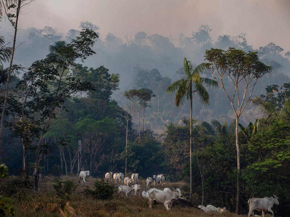 Nuevo informe destaca la importancia de la protección de la tierra y de los animales para ...
