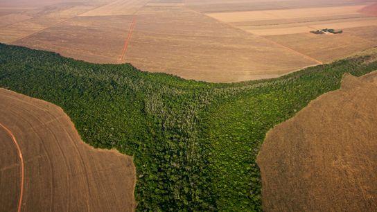 Brasil es uno de los varios países clave donde la deforestación debe limitarse para prevenir el ...