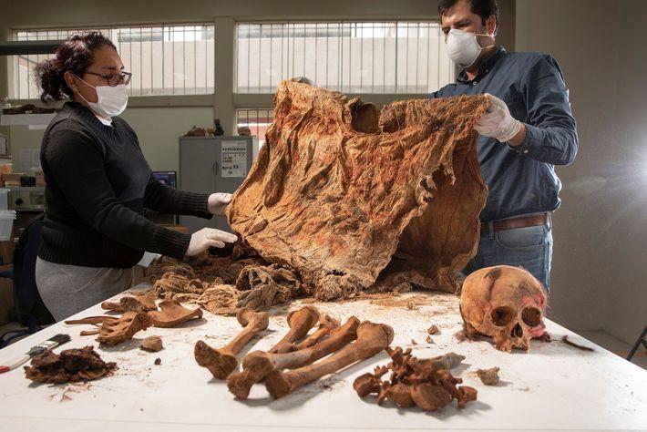 Los arqueólogos estudian un sacrificio infantil de la fosa común del yacimiento de Pampa La Cruz, ...