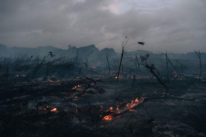 Tierra ardiendo cerca de Belmopan. Los terratenientes en Belice a menudo queman y limpian la jungla ...