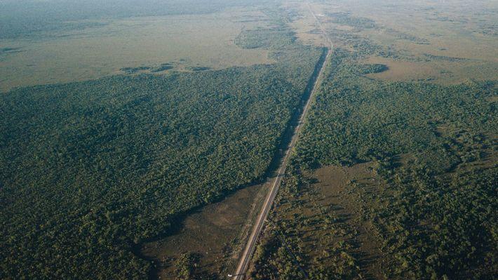 El Corredor del Bosque Maya es un tramo de bosque que desaparece rápidamente en el centro ...