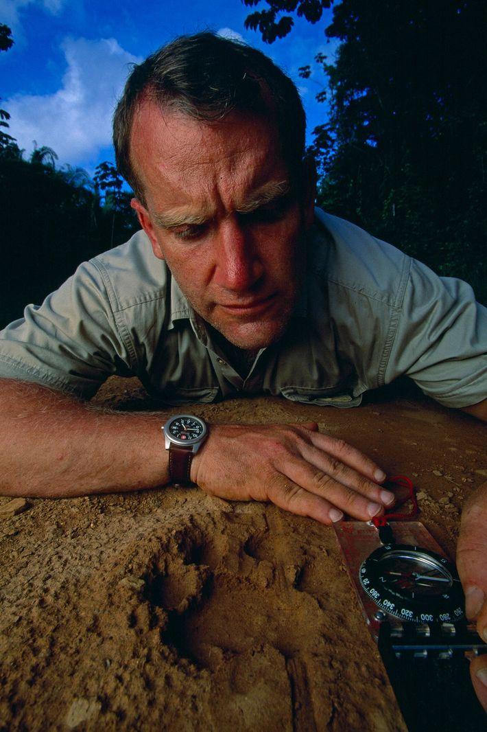 Alan Rabinowitz recopila datos sobre una pista de jaguar macho en una ruta en el Cockscomb ...