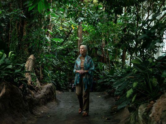 Jane Goodall se une a la campaña para plantar un billón de árboles para el año ...