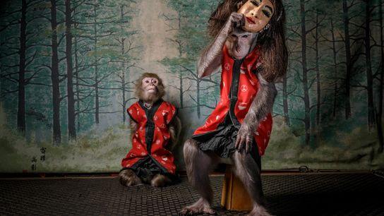 Luego de que los clientes de Kayabuki Tavern, en Utsonomiya, Japón, terminaron de comer, los monos suben ...