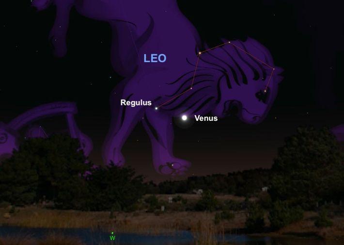 El brillante planeta Venus se encontrará con Regulus, el «corazón» de la constelación Leo, el 9 ...