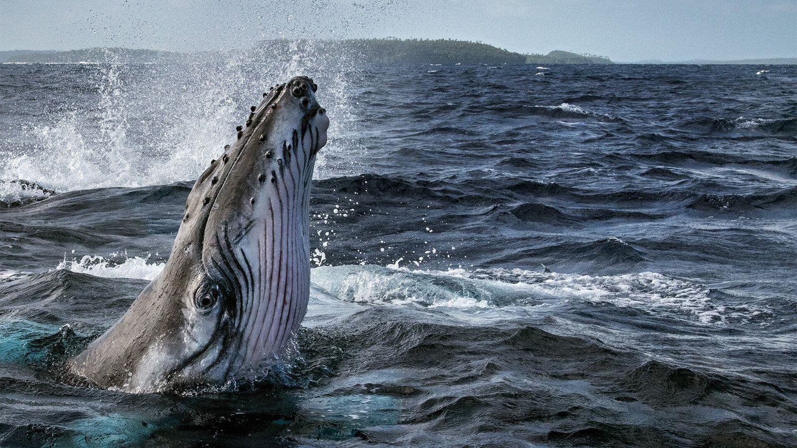 Avance | Secretos de las Ballenas