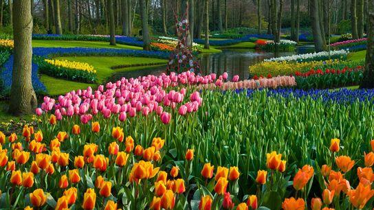 Del 21 de marzo al 10 de mayo, más de siete millones de bulbos producen campos ...