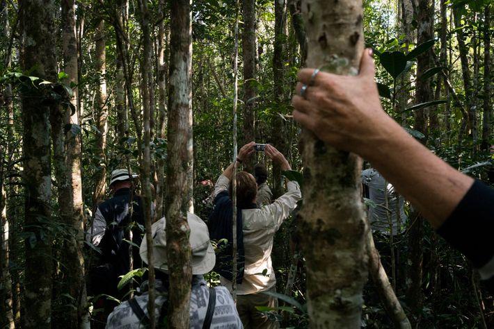 Antes de la pandemia, en los bosques de Madagascar, era muy común encontrar escenas como esta ...