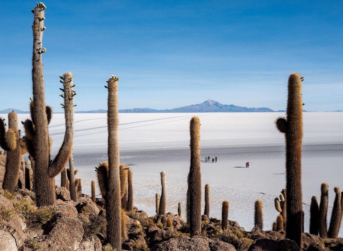 """Incahuasi, """"casa de los incas"""" en quechua, era una isla cuando el salar de Uyuni de ..."""