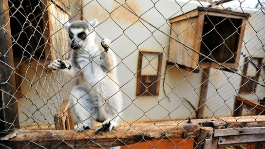 Lemur rehabilitation center Madagascar