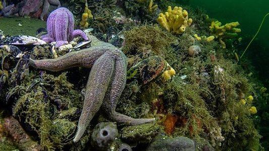 Pristine Seas: Nueva expedición partió a los Fiordos Patagónicos de la zona austral de Chile