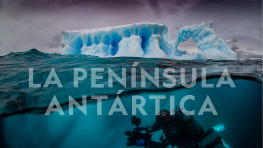 National Geographic estrena un documental sobre una expedición inédita de Pristine Seas a La Península Antártica