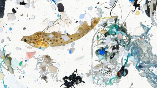 Impresionantes fotografías revelan cómo el plancton convive con el plástico