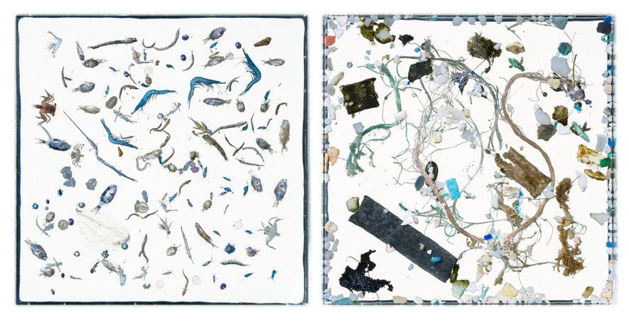 En este par de imágenes, vemos vida marina por un lado (izquierda) y restos plásticos por ...