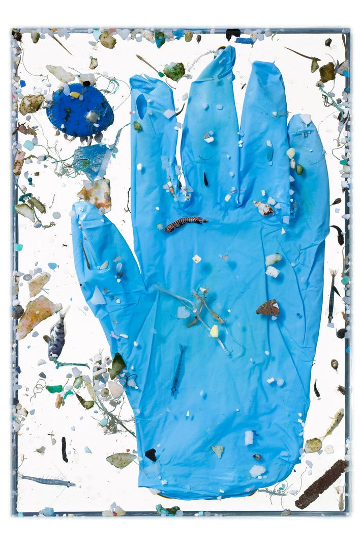 Peces jóvenes, entre los que vemos un ejemplar joven de dorado (centro), nadan rodeados de desechos ...