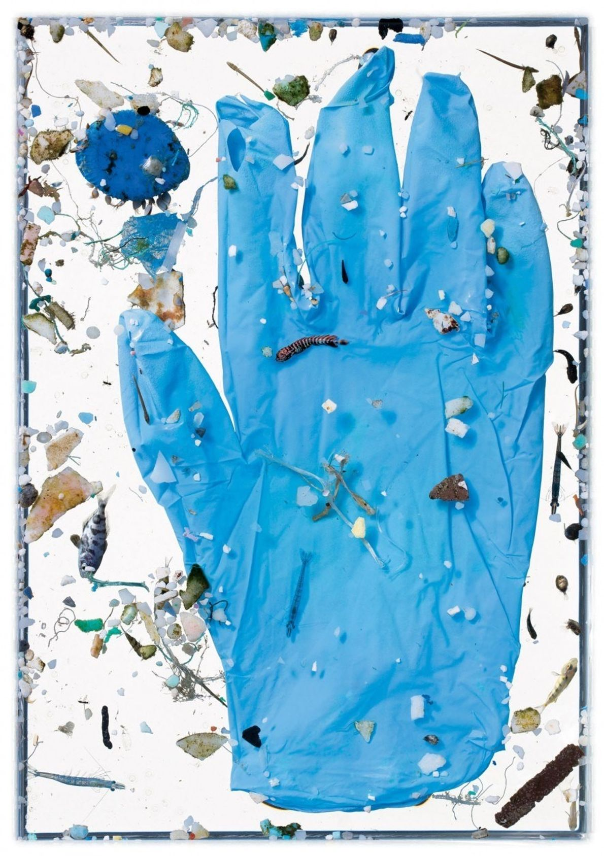 El guante azul no lleva tanto tiempo en el agua como para haber sufrido el destino ...