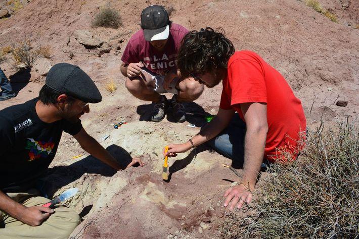 El equipo de expertos trabajando. Las rocas en las que fue hallado el Tralkasaurus tienen una ...