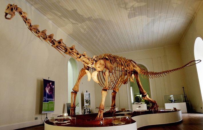 Una réplica de tamaño completo del dinosaurio Maxakalisaurus topai se ve en exhibición en el Museo ...
